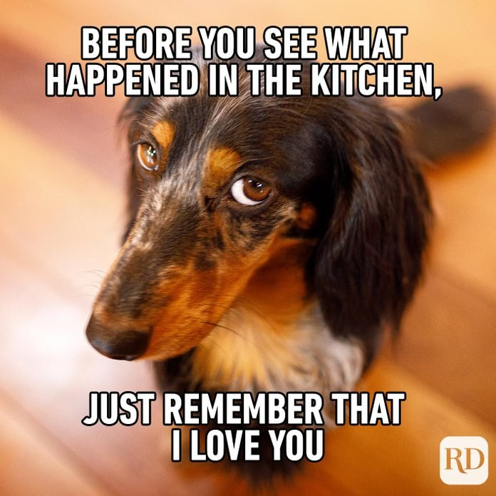 Dog looking apologetically at camera. Meme text: Before you see what happened in the kitchen, just remember that I love you