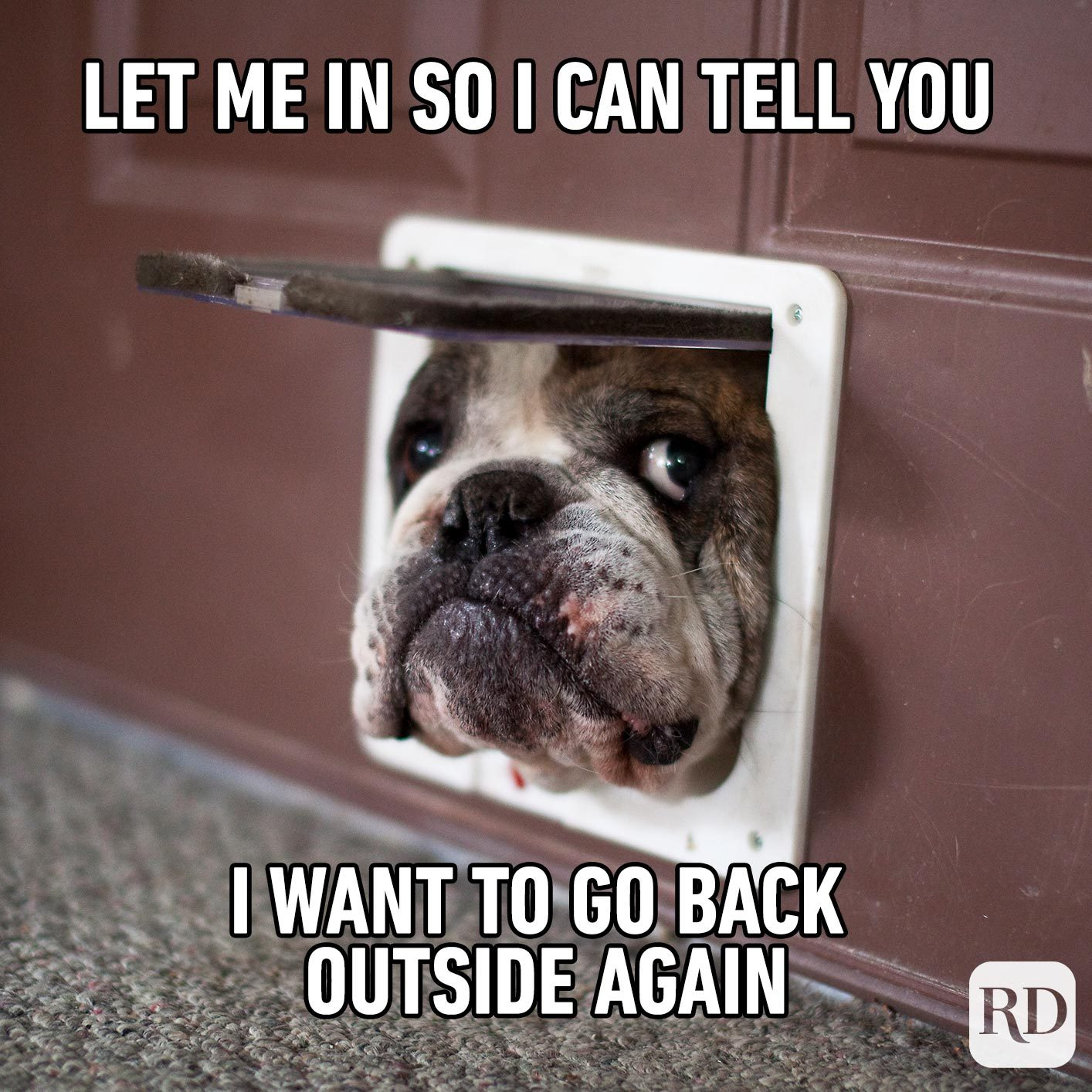 Dog sticking out of doggy door. Meme text: Let me in so I can tell you I want to go back outside again