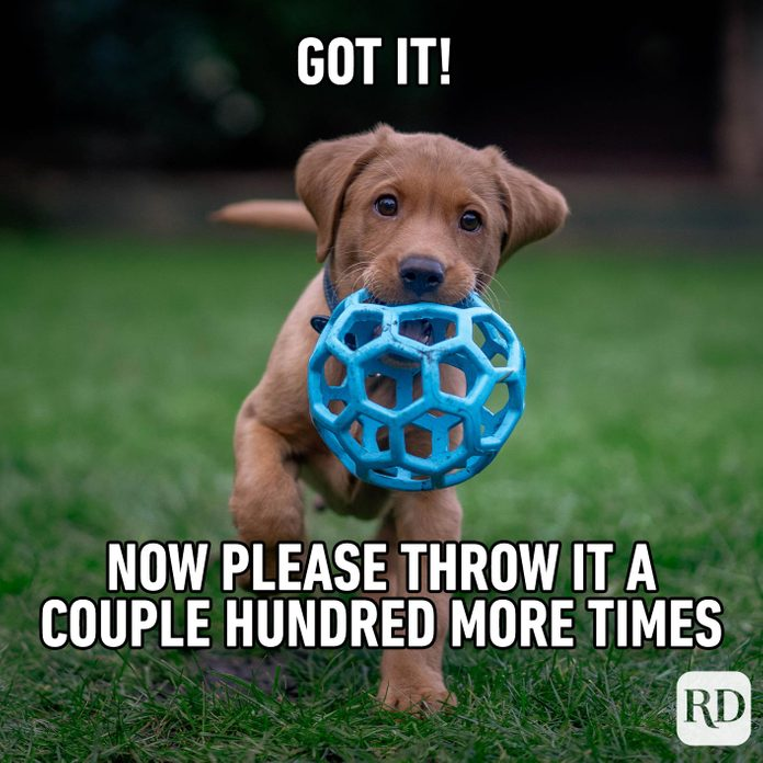 Dog holding a ball toward camera. Meme text: Got it! Now please throw it a couple hundred more times