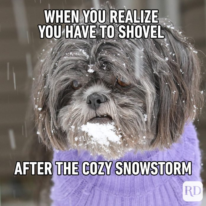 A dog in a sweater looking sadly into snow. Meme text: When you realize you have to shovel after the cozy snowstorm
