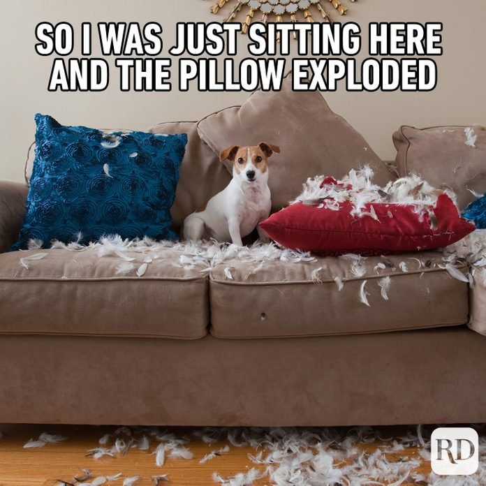 Dog sitting on couch surrounded by feathers of broken pillows. Meme text: So I was just sitting here and the pillow exploded
