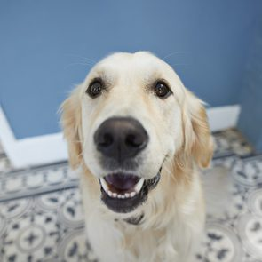 Cute dog shot from POV / selfie angle
