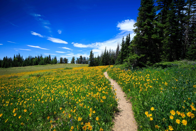 Wildflower Path at Cedar Breaks