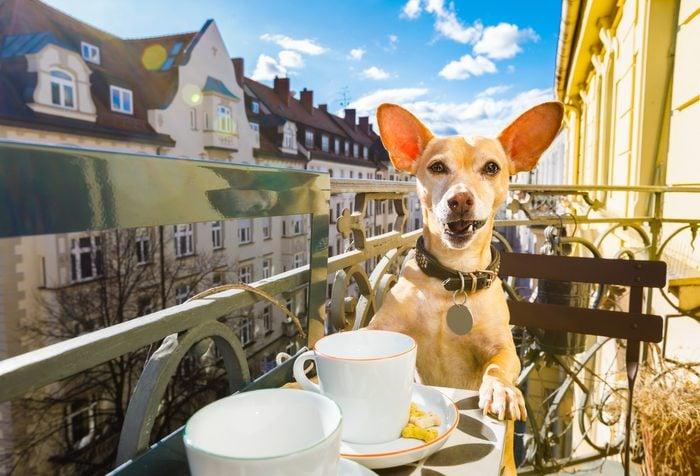 dog having a coffee break