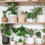 13 Houseplants Anyone Can Grow