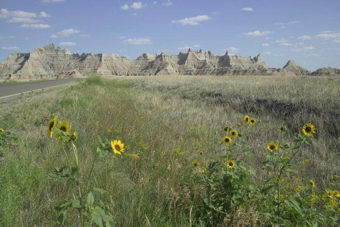 Prairie with flowers Badlands National Park