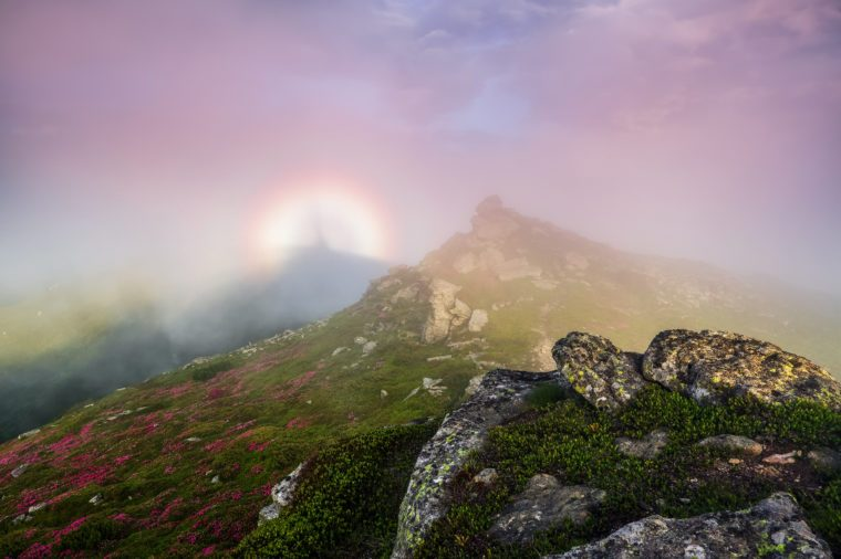 In the pink fog there is a halo of rainbow of the fantastic natural phenomena Brocken spectre. Lawn with the blooming rhododendrons and rocks. Tourist scenery. Location Carpathians, Ukraine, Europe.