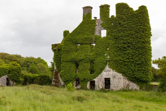 A front on view of the spectacular and magical ivy clad castle that has been left abandoned and left to the forces of nature