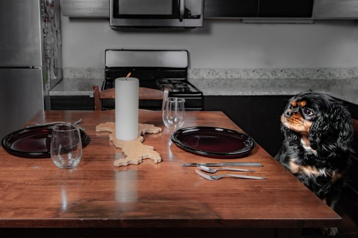 A hungry dog sits at a table in a kitchen