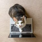 "9 Funny Photos of Cats ""Working from Home"""