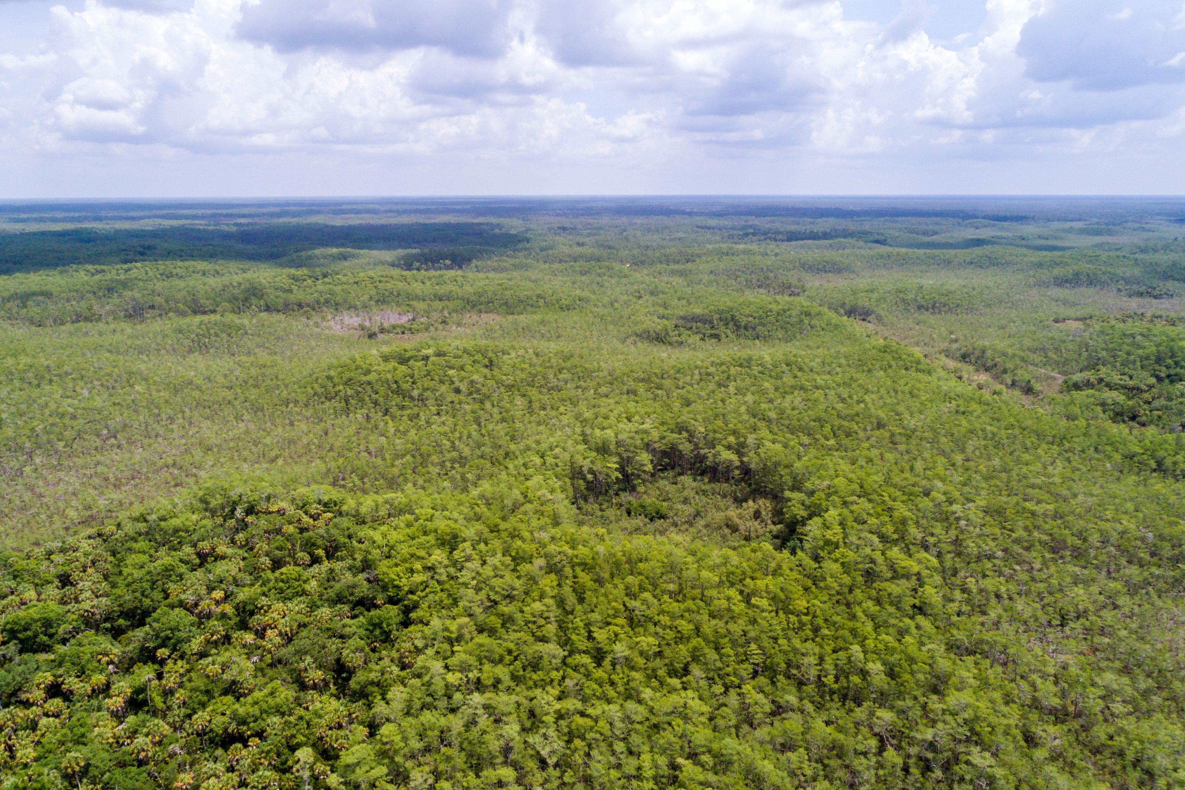 Florida, Naples, Everglades, Big Cypress National Preserve