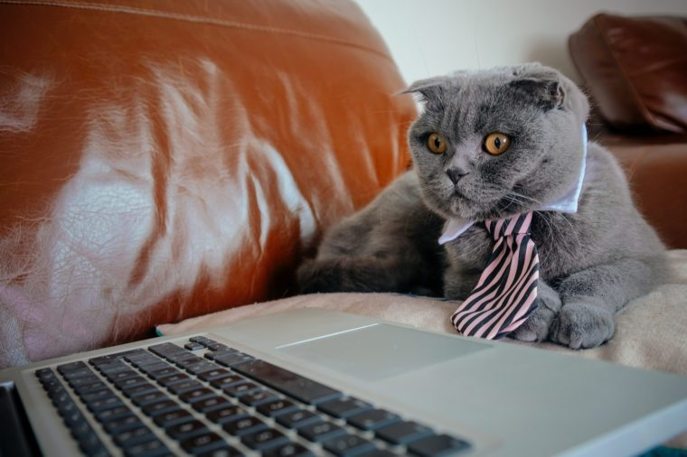 Cat working from home