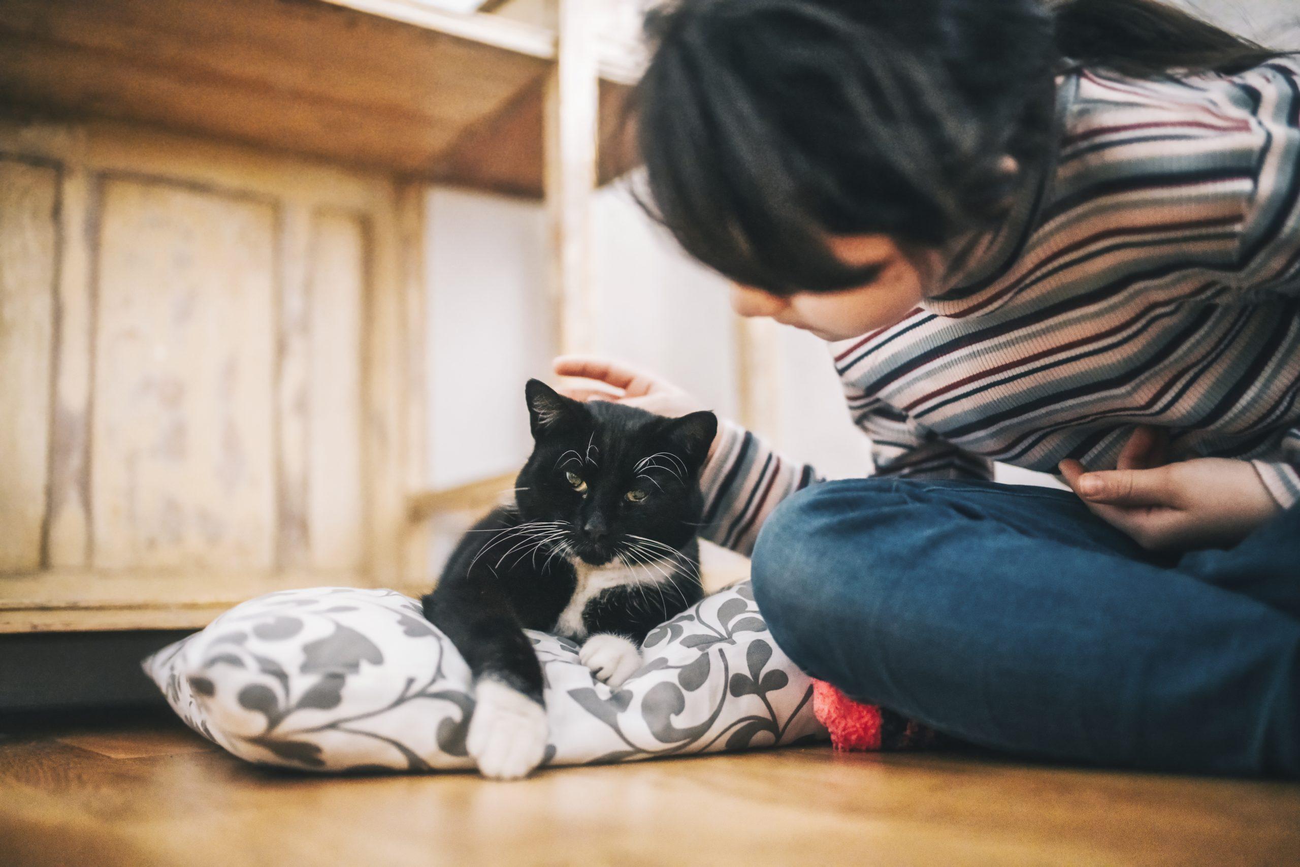 little girl stroking black cat