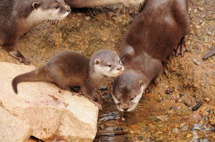 Otter cub.