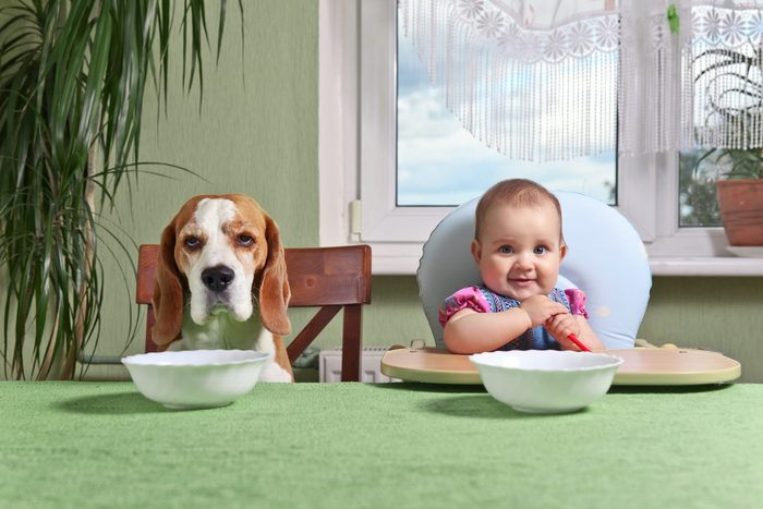 girl with a dog waiting for dinner