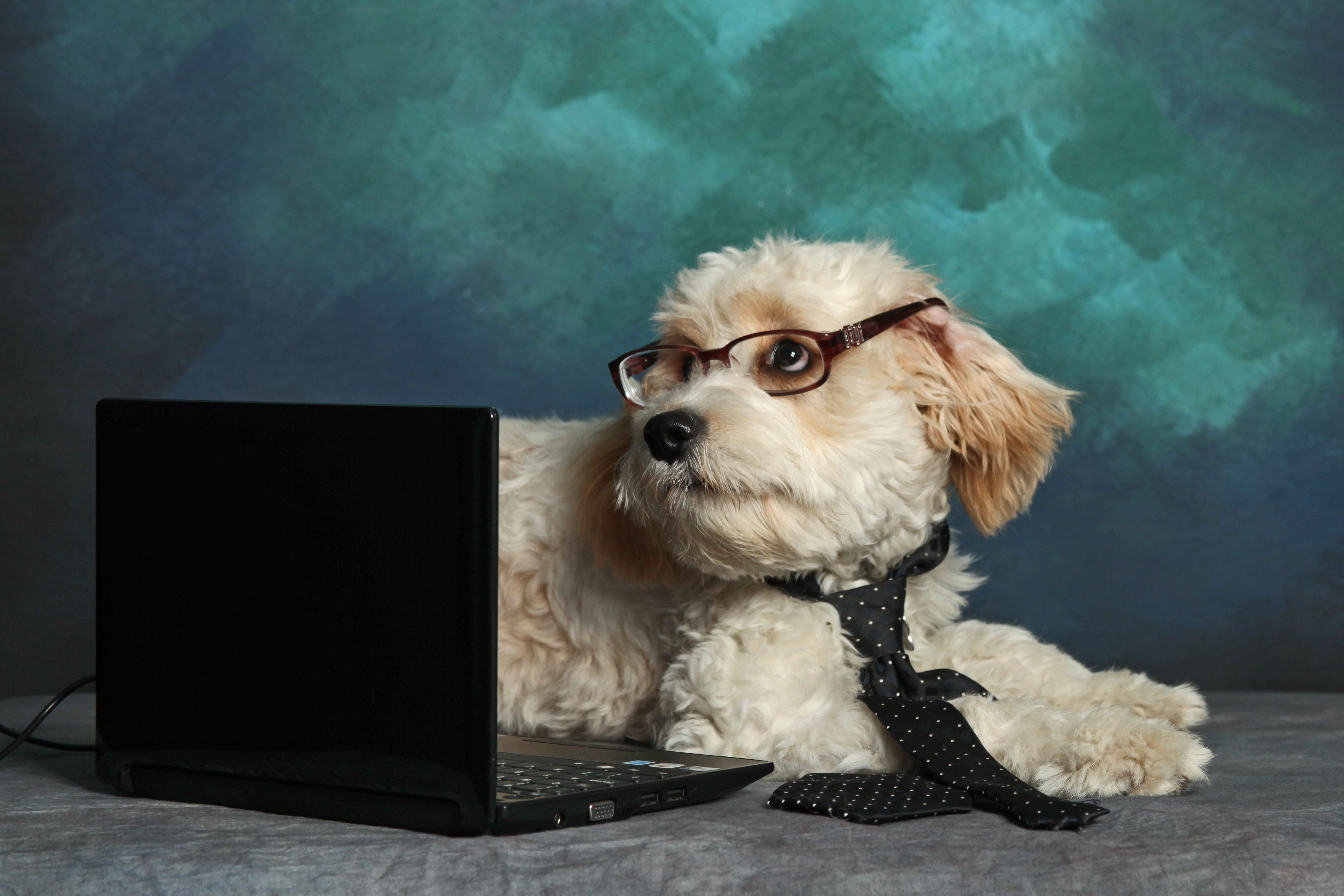 Dog Wearing Eyeglasses And Tie Sitting With Laptop Against Wall