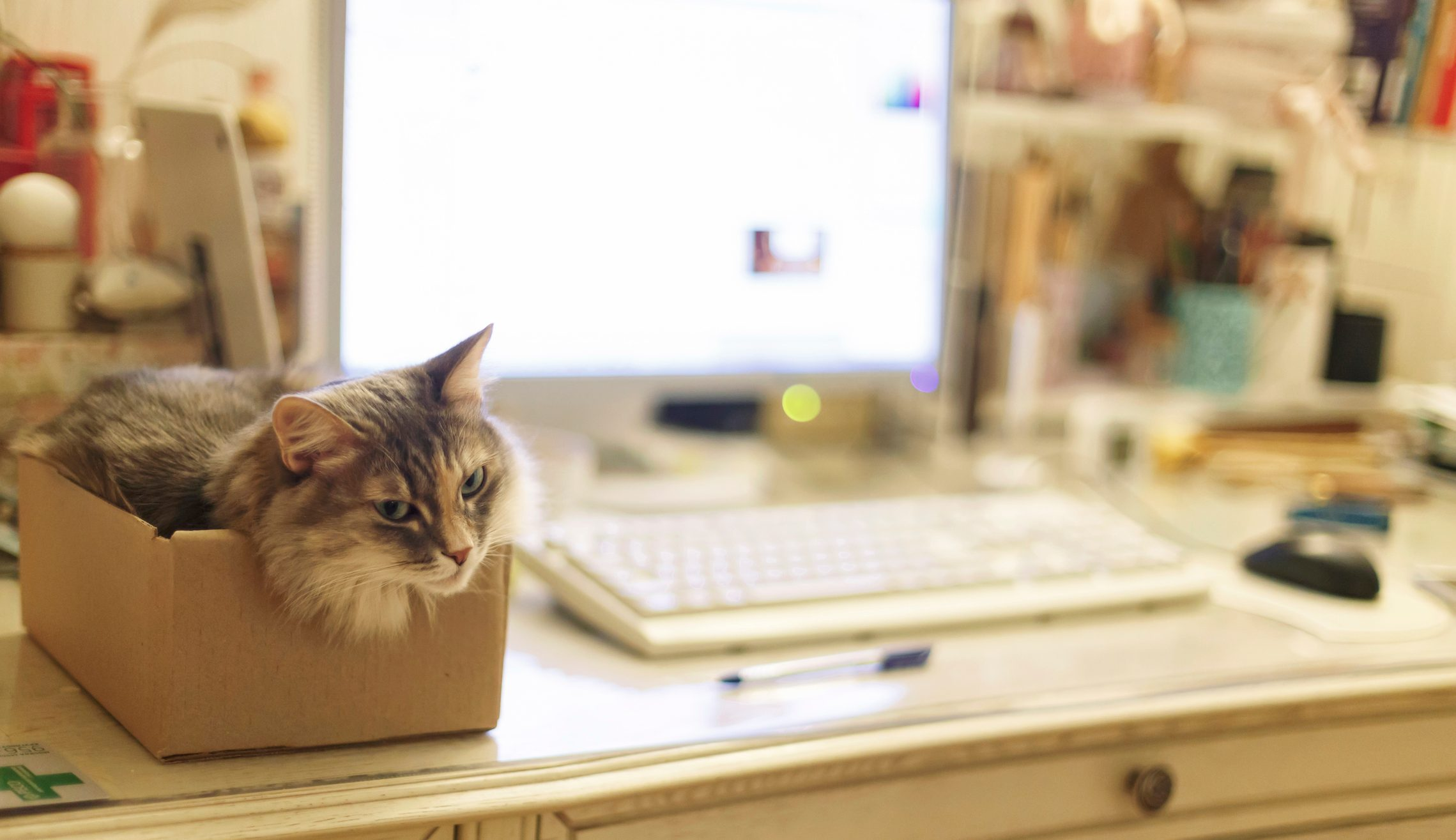 A cat sitting in the box in a home office