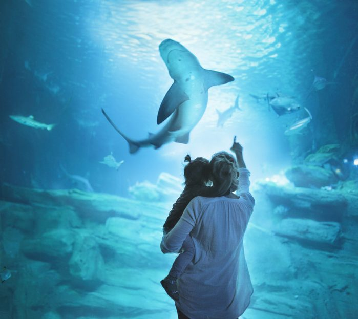 Mother with daughter on shoulders looking at shark
