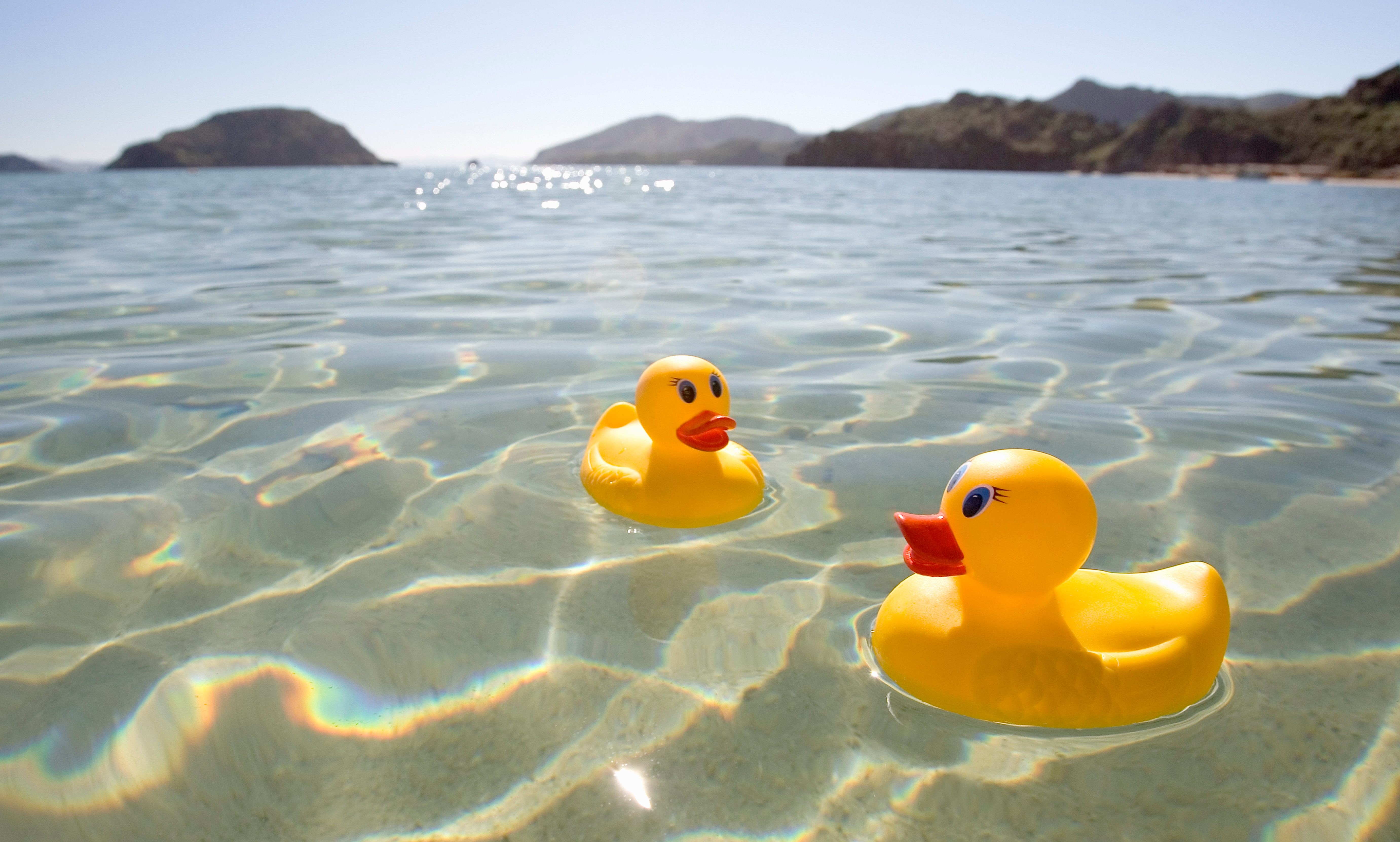 Rubber ducks floating in lake