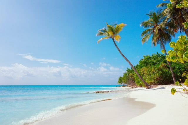 Beach at Maldives island Fulhadhoo with white sandy idyllic perfect beach and sea and curve palm