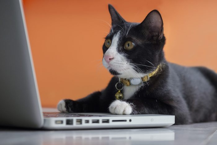 Black cat working at the computer as a developer online