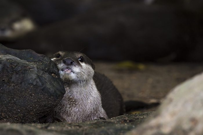 Image of an otters on the ground. Wildlife Animals.