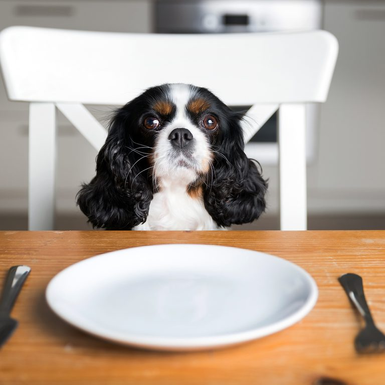 Dog by the table