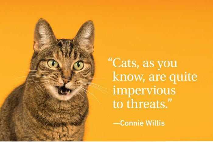 Cat on yellow orange background with a quote about cats
