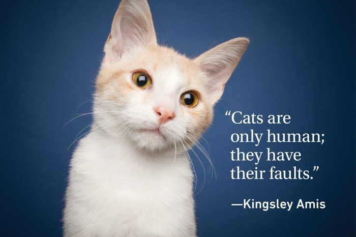 Cat on blue background with a quote