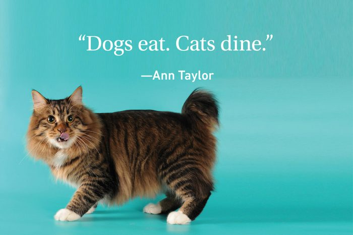Cat on turquoise background with a quote