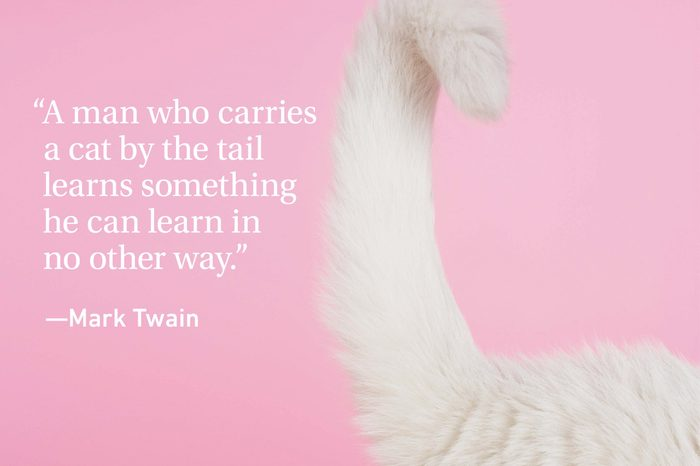 Cat tail on pink background with a cat quote