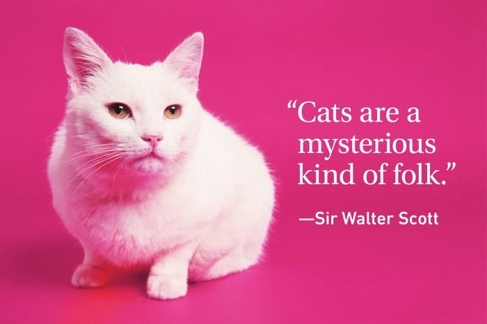Cat on magenta background with a cat quote