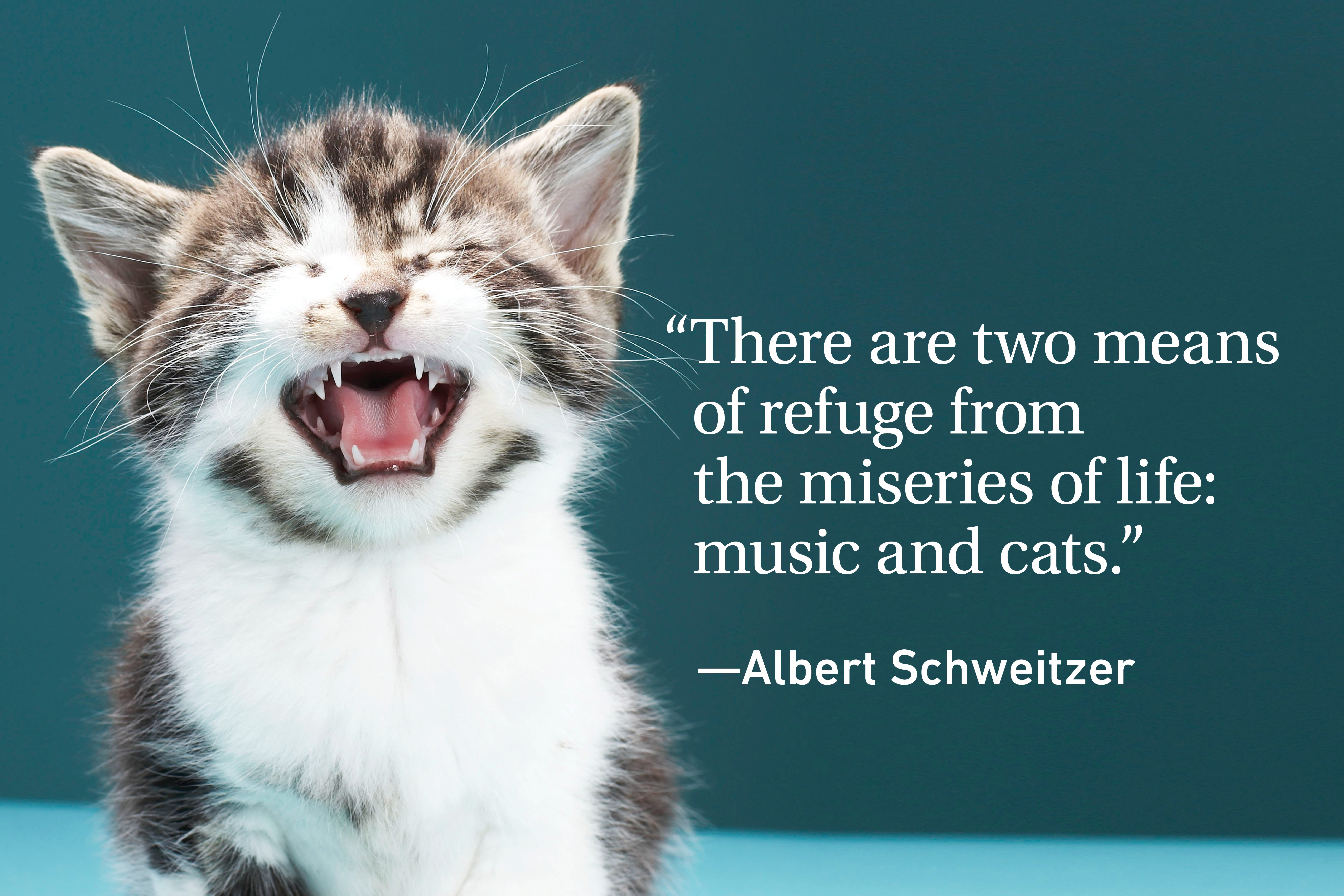 Funny cat on green background with a quote