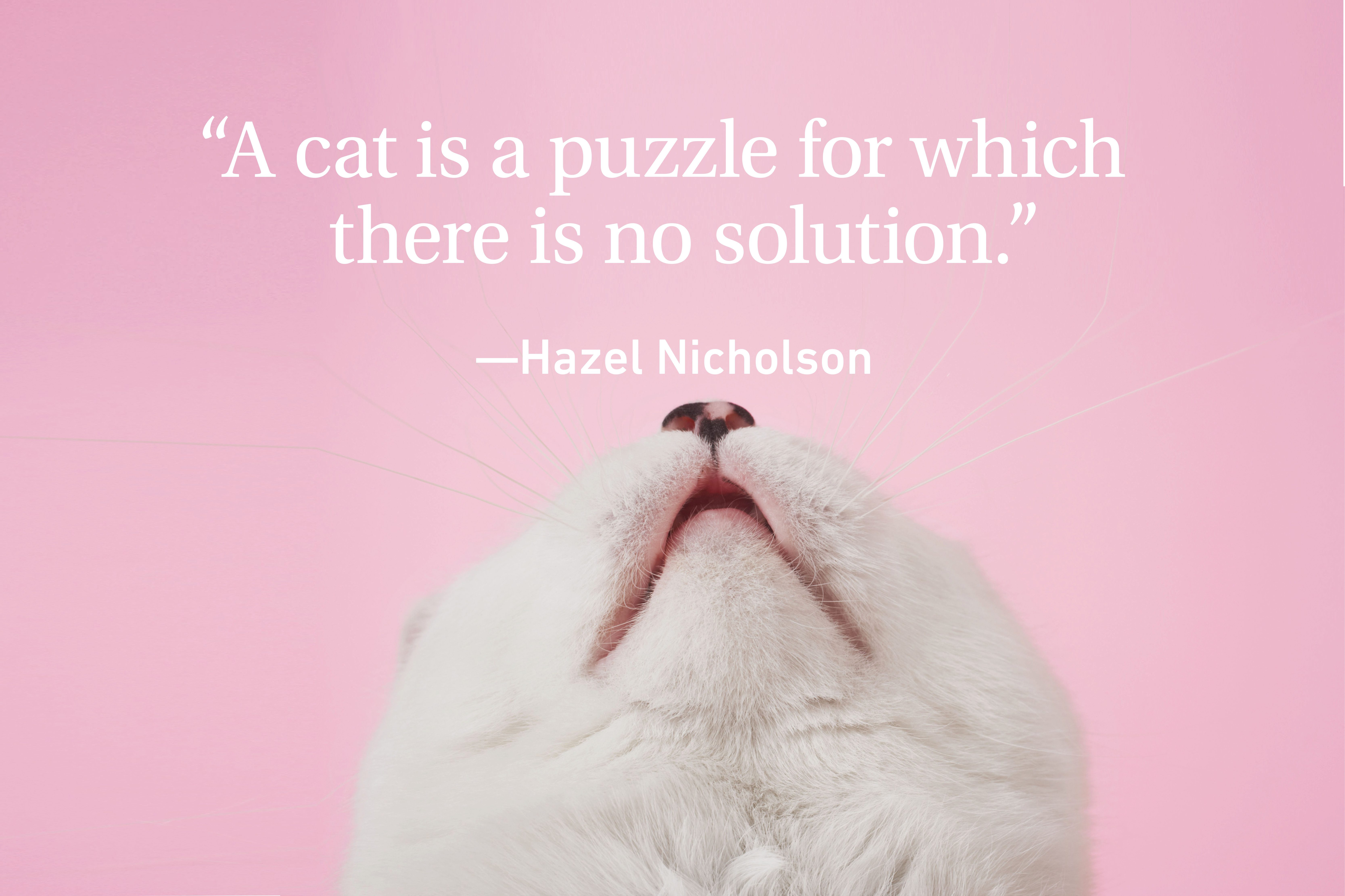 Cat face on pink background with a quote above
