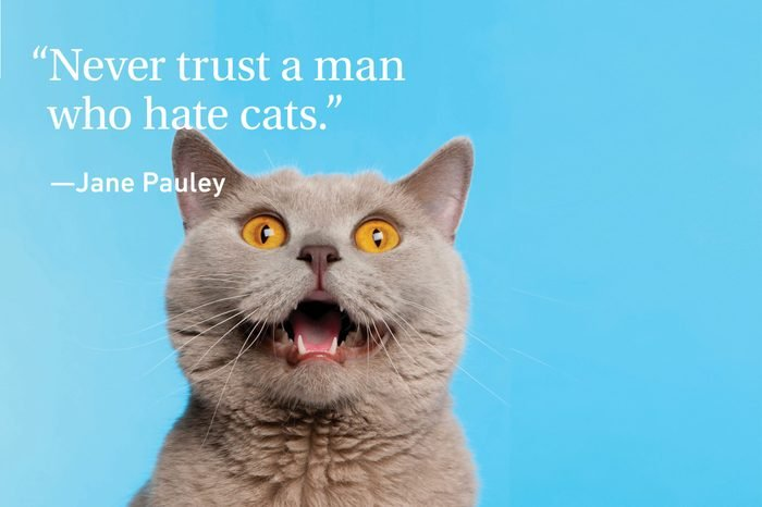 Funny Cat growling on cyan background with a quote