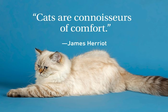 Cat laying down on teal background with a quote above about cats