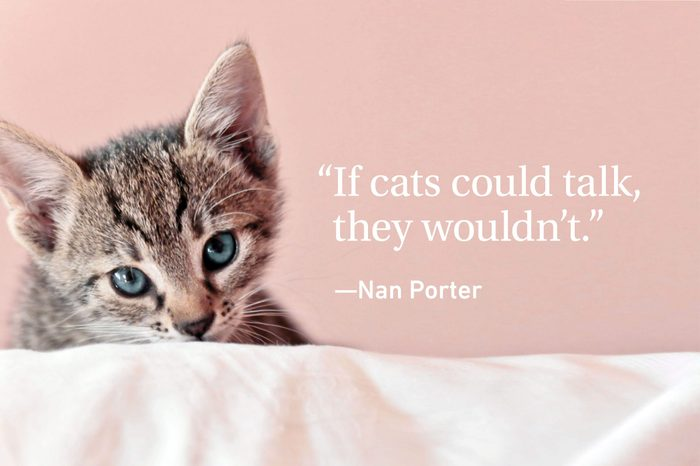 Kitten on pink background with a quote on cats