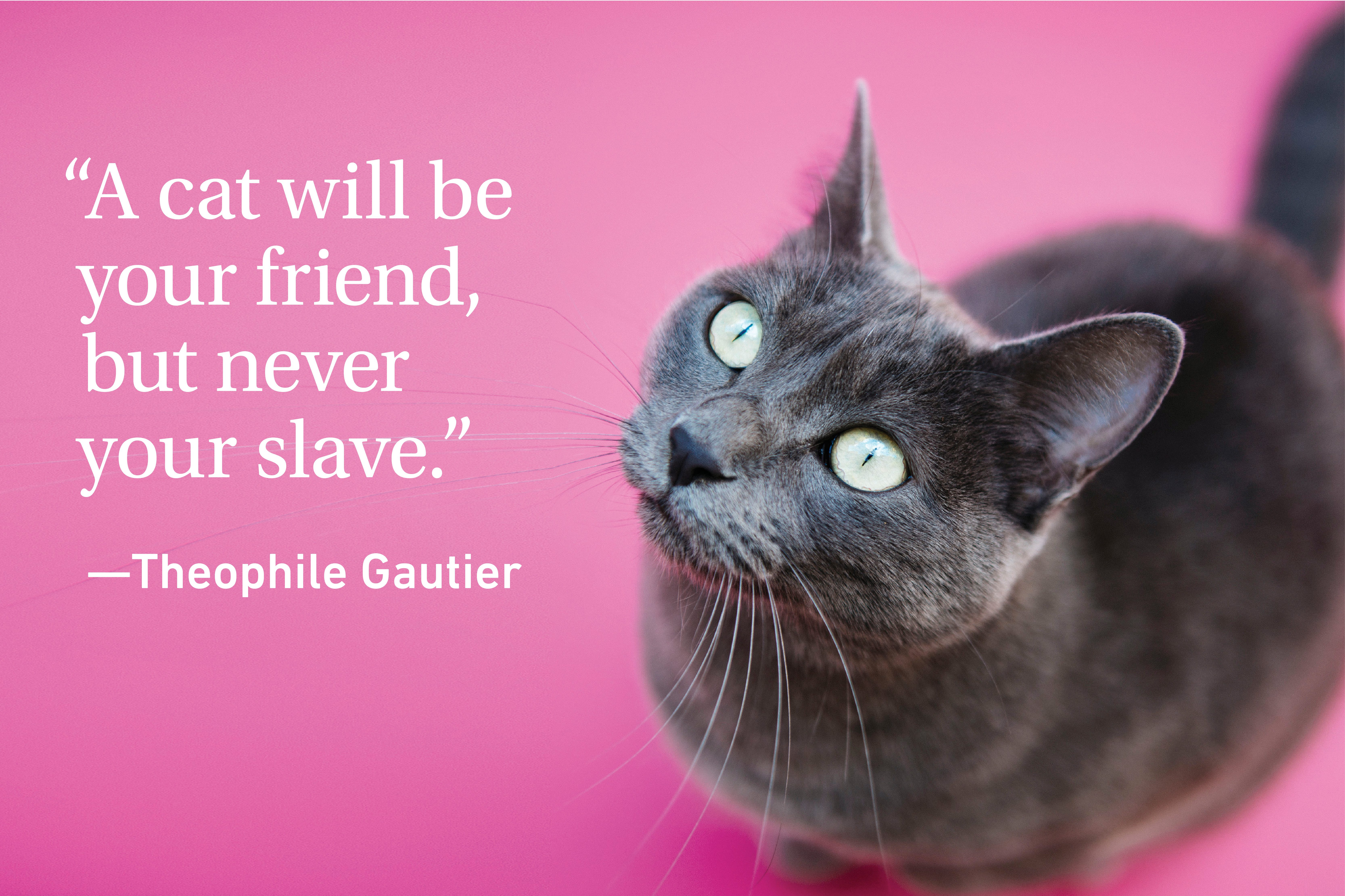 Cat quote on pink background with a grey cat