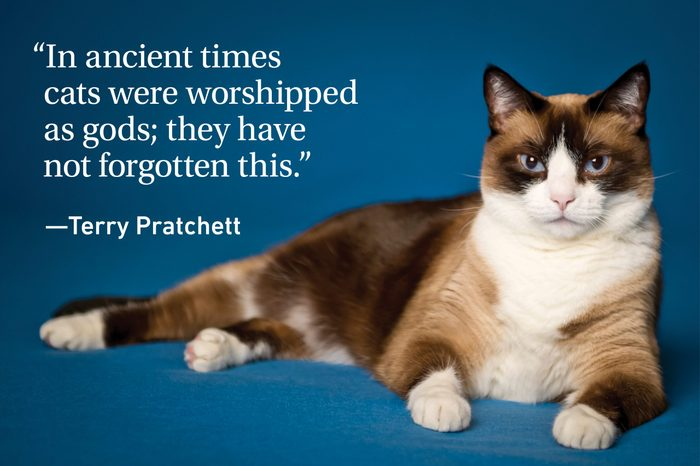 Cat quote on teal background with a cat