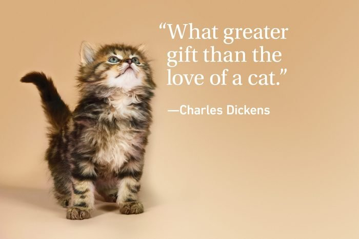 Kitten on orange background with a quote