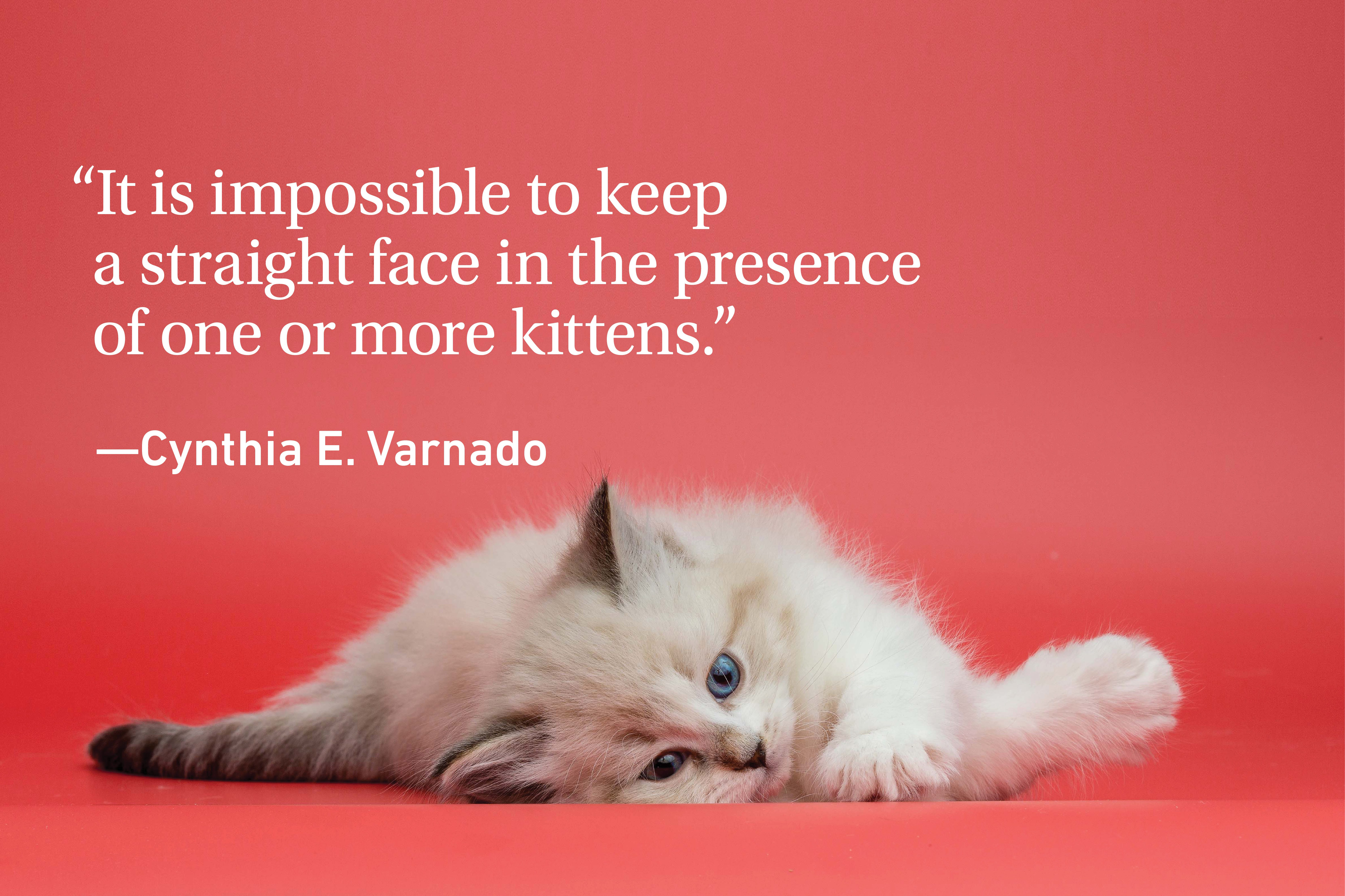 Kitten on a red background with a cat quote