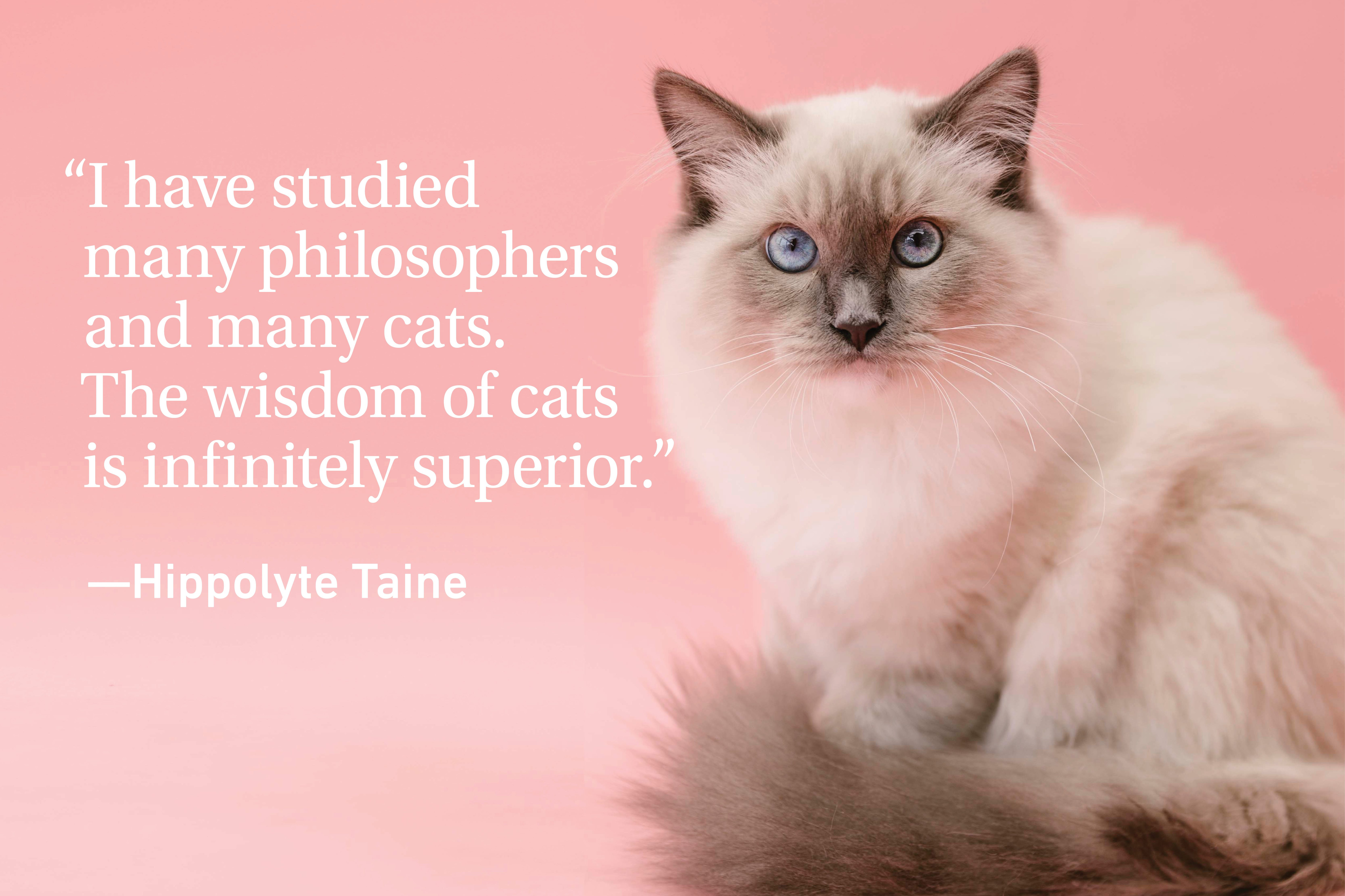 Cat quote on pink background with a cat