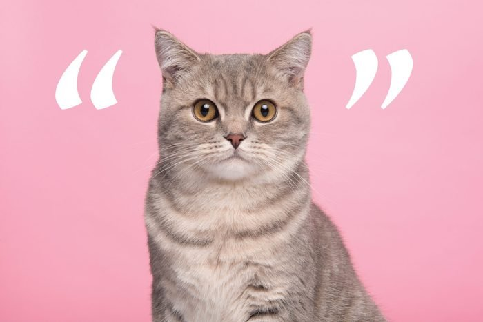 Cat on pink background with quotation marks around it