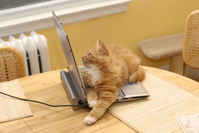Cat sitting on open laptop computer