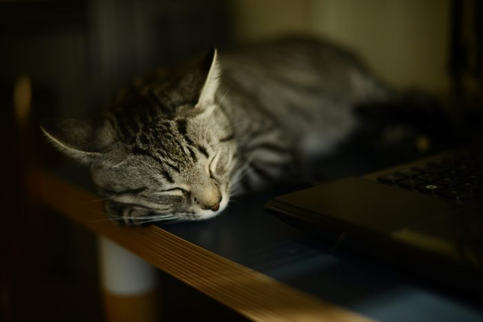 a cat sleeping on a desk by a laptop