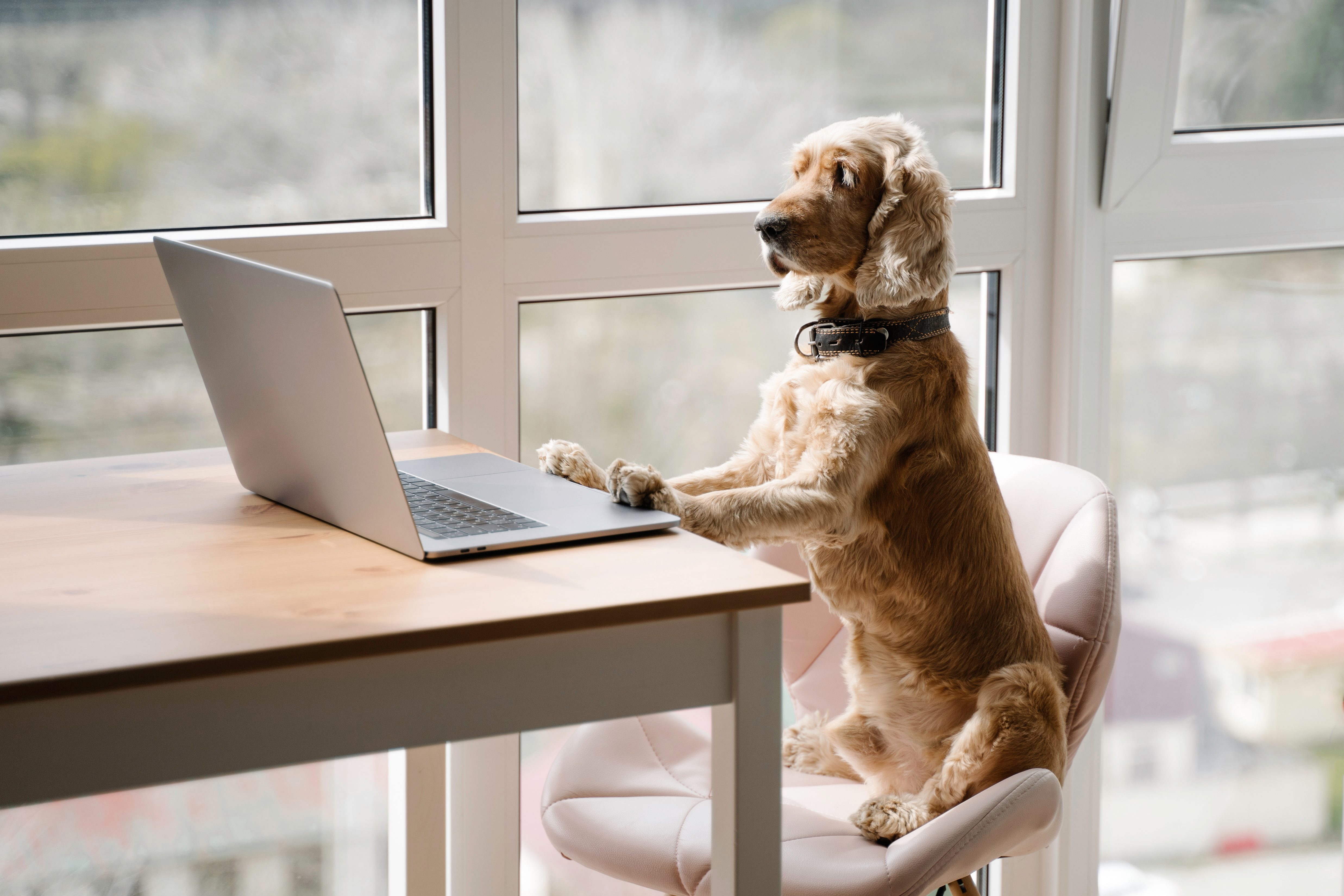 Dog working with laptop