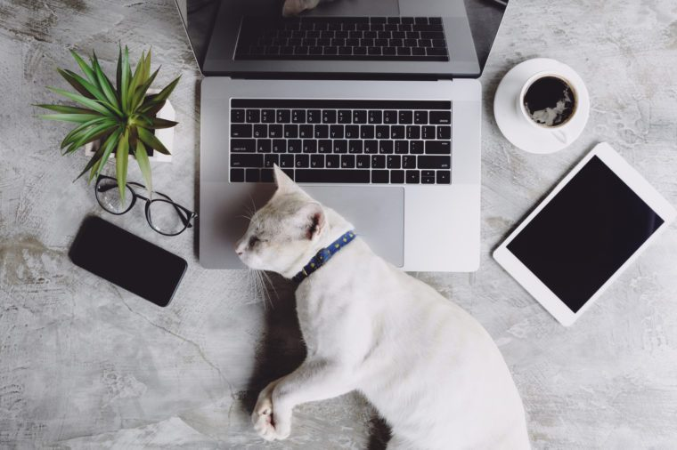 cat pet sleeping on work desk