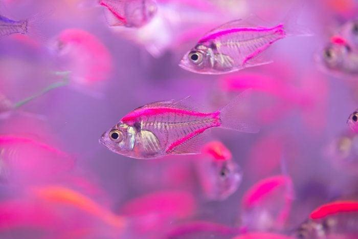 Beautiful fish,fish