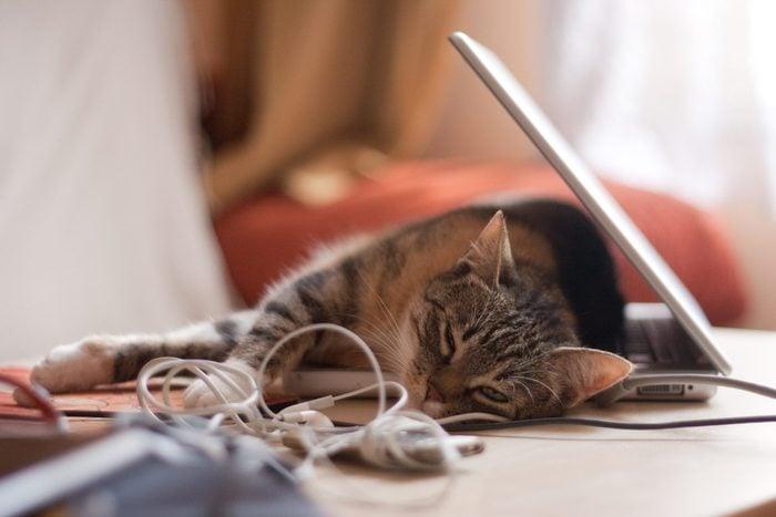 cat sleeping on laptop