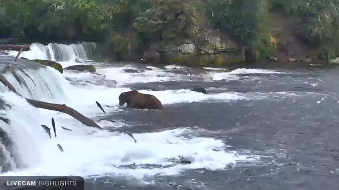 brooks falls katmai national park